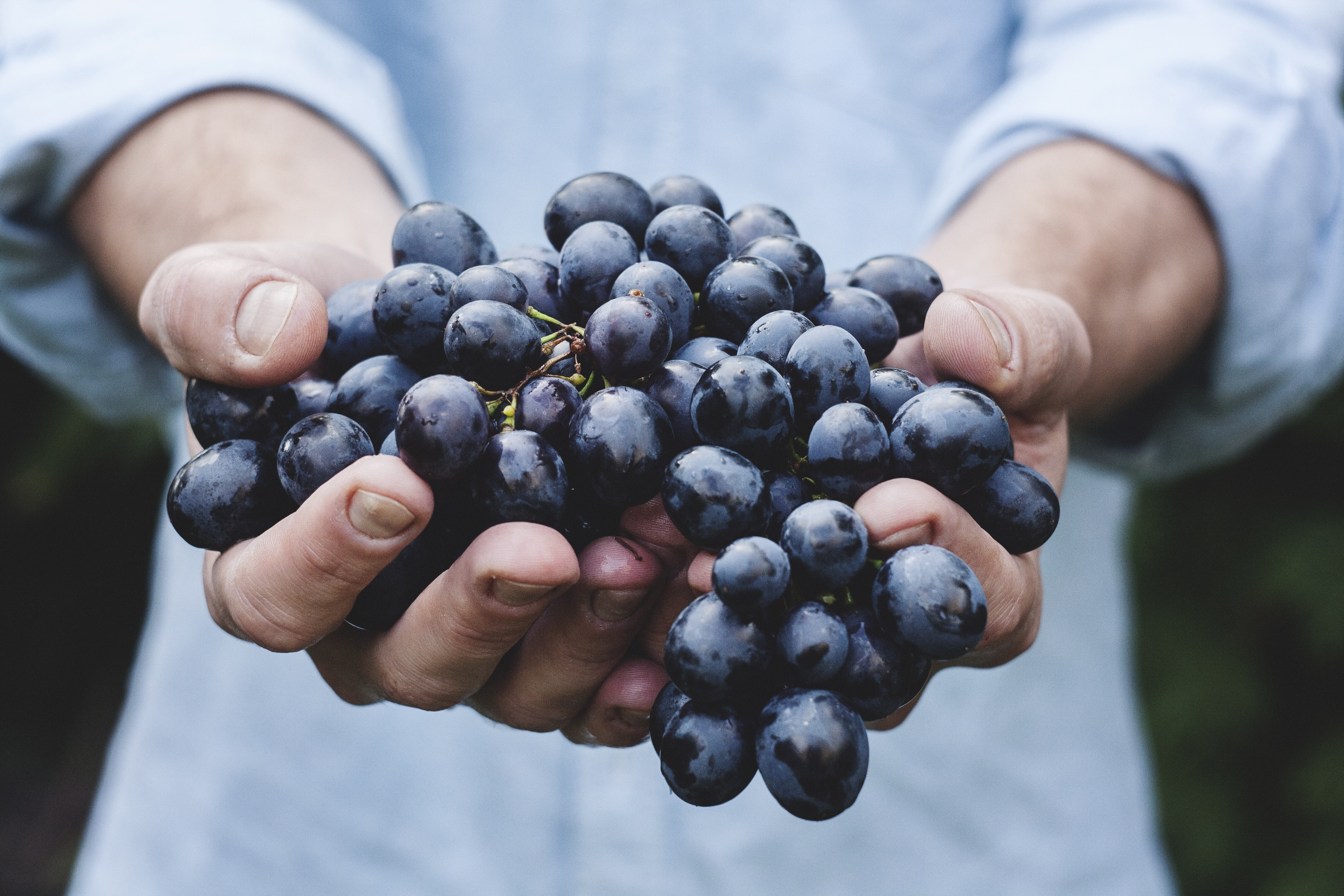 Localize-Stock-Grapes-Hands.jpg